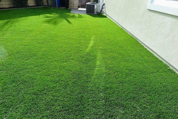 Let Your Expensive Singapore Carpet Grass Live Longer