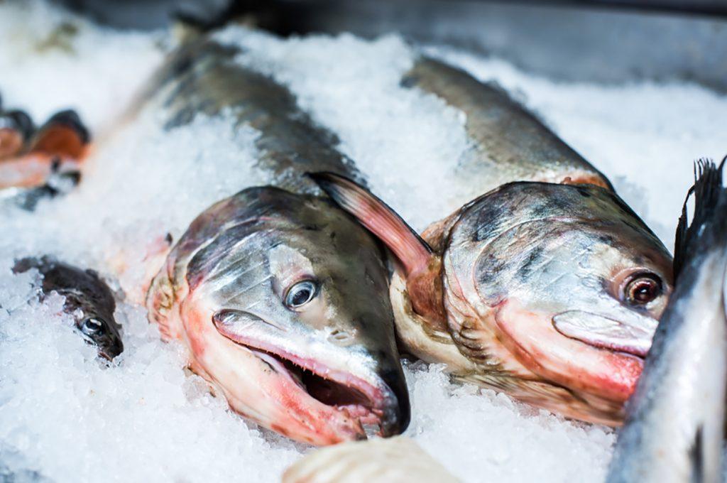 frozen fish hong kong